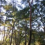 Forest bathing 森林浴
