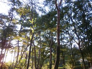 森林浴2_ダルベールハッコートカゲ