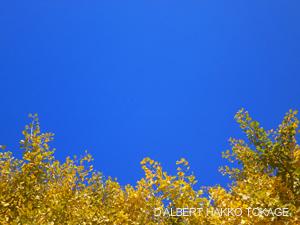 青い空とイチョウの木_ダルベールハッコートカゲ